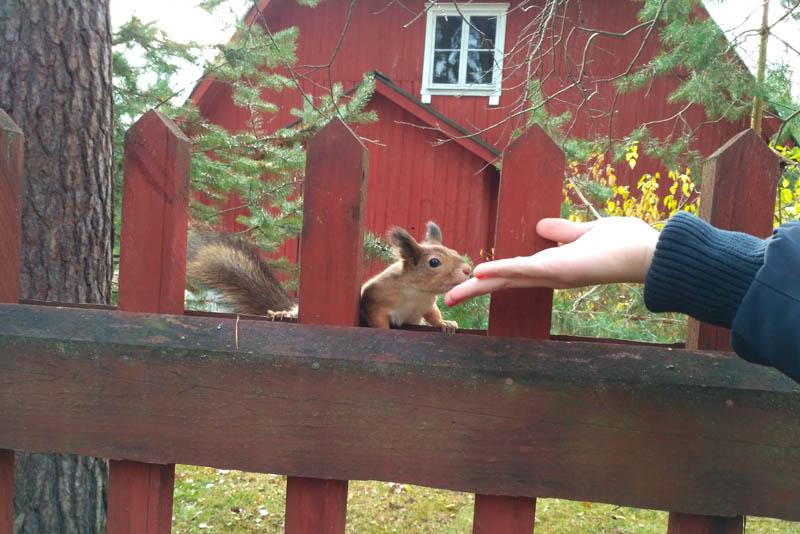 Хельсинки за 2 дня. Прогулка на Сеурасаари + музеи