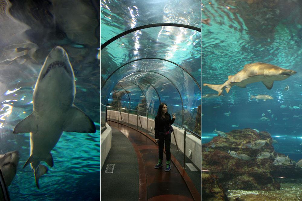 Аквариум (океанариум) Барселоны. Как купить билет онлайн