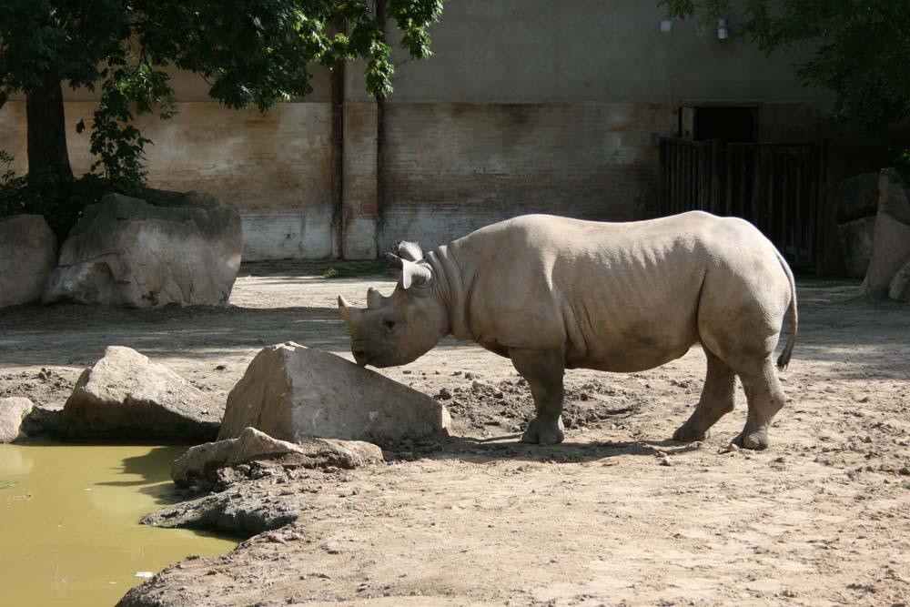 Зоопарк Двур-Кралове