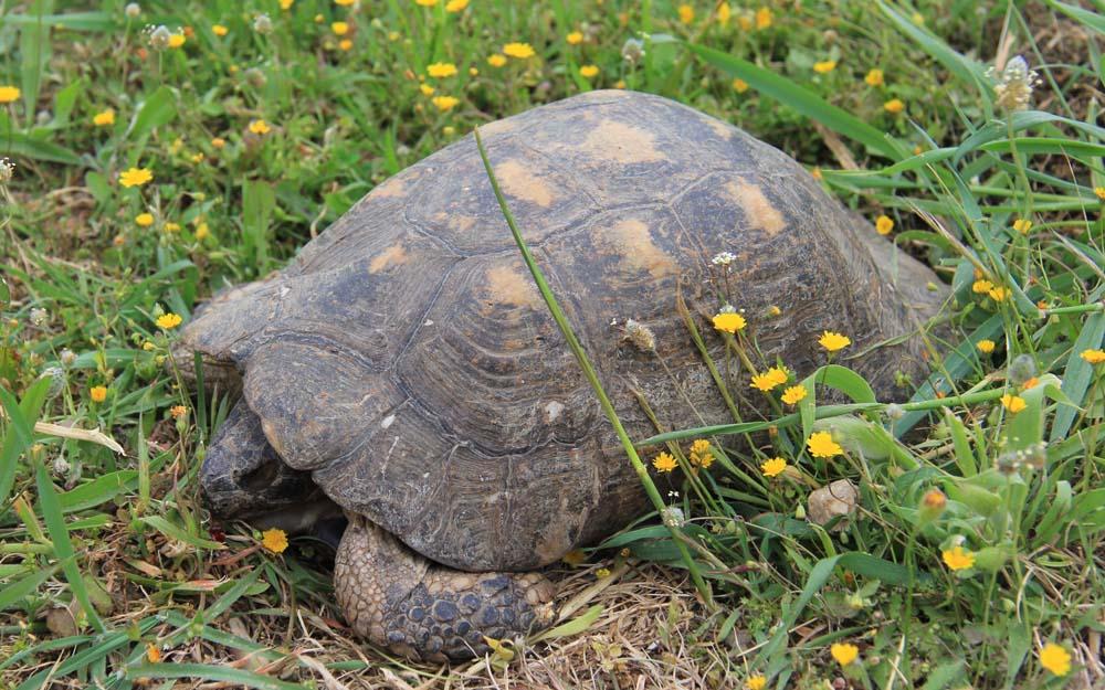 Черепахи в Керамике