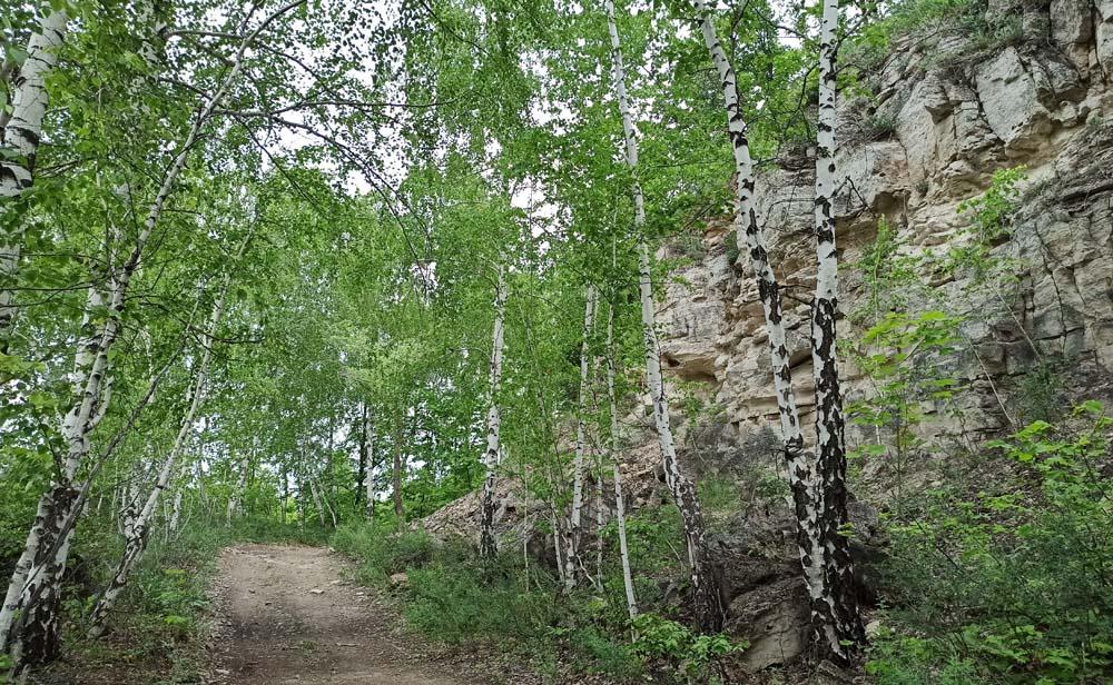 Лесные тропинки на горе Тип-Тяв