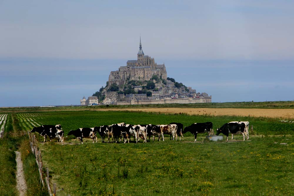 Овечки пасутся на фоне Мон-Сен-Мишель