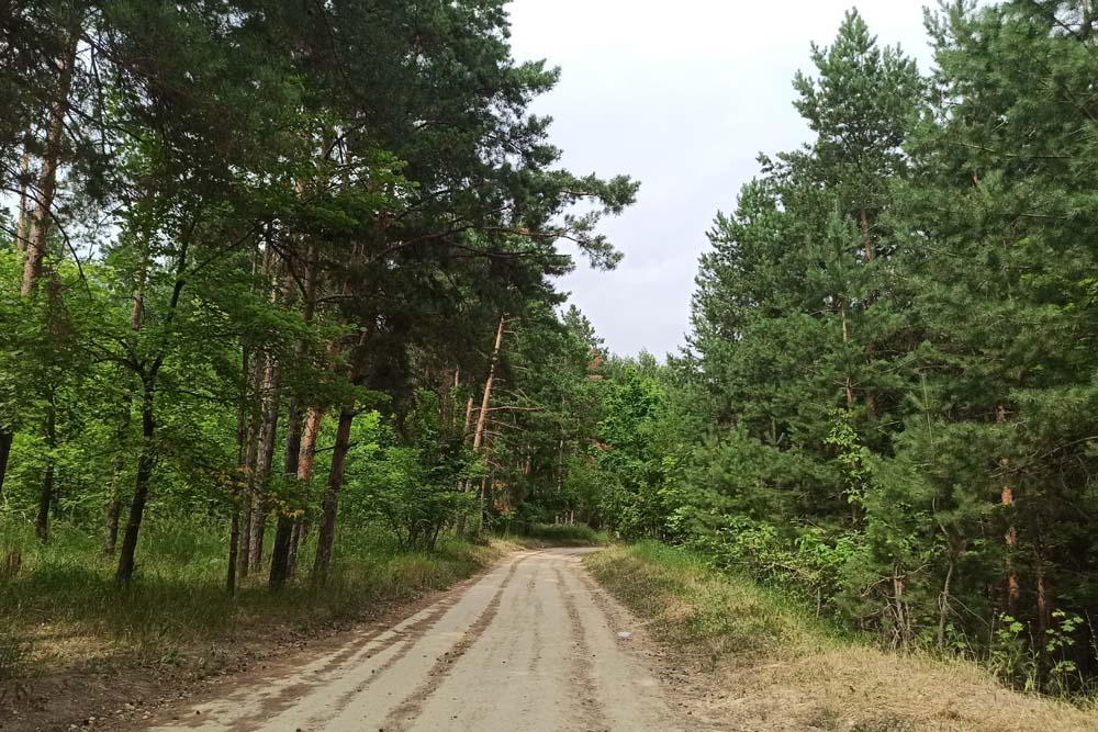 Дорога в Семрук