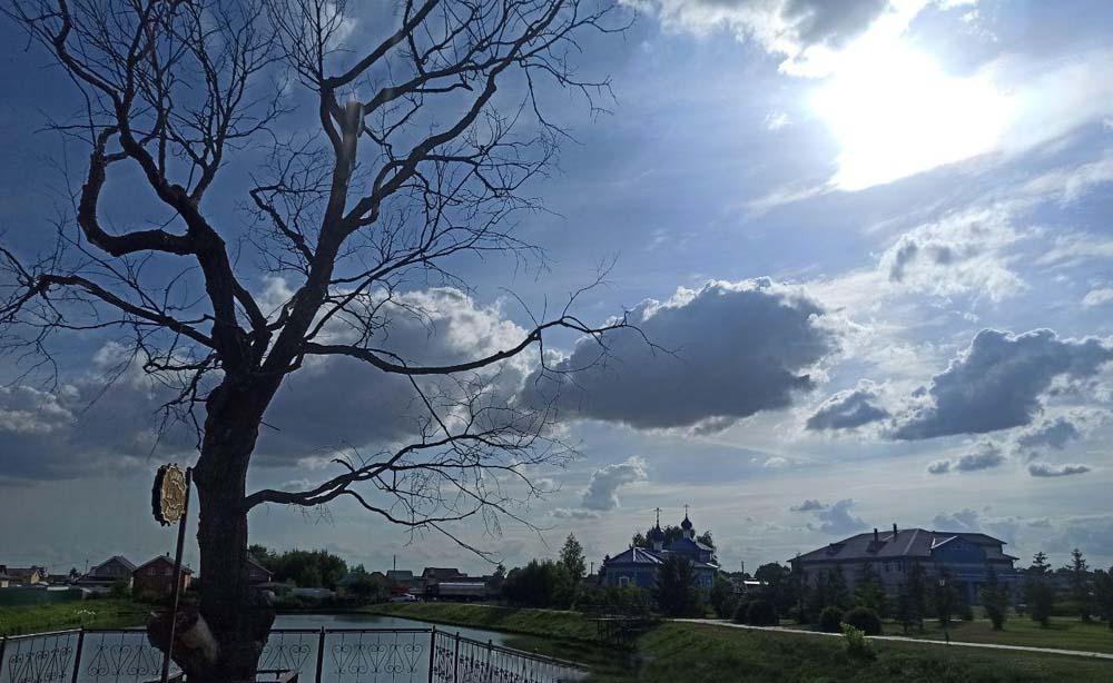 300-летнее дерево